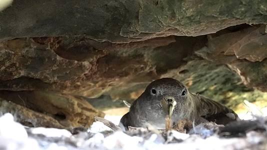 Aves marinas, la extinción silenciosa