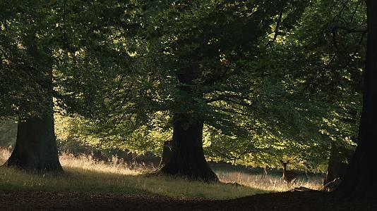RTVE.es estrena el tráiler de 'La vida secreta de los árboles': la naturaleza como nunca la habías pensado