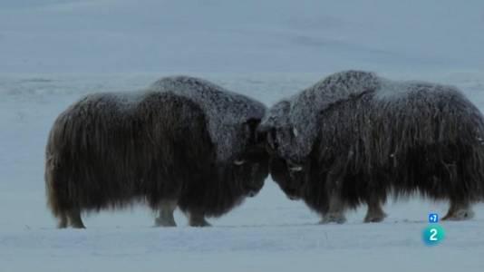 Els edens salvatges de Rússia