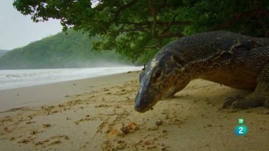 Indonèsia salvatge. Terra de dragons
