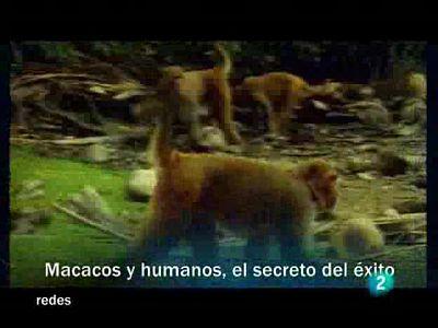 Macacos y humanos
