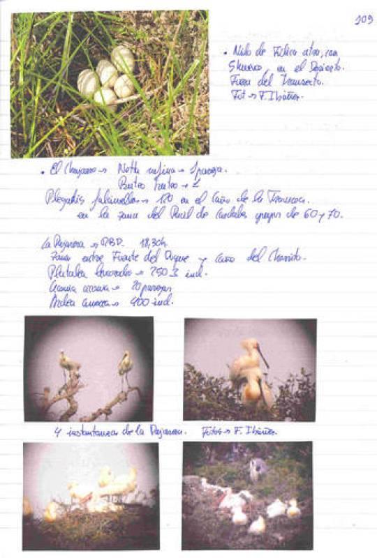 Los cuadernos de campo de Doñana, abiertos al público