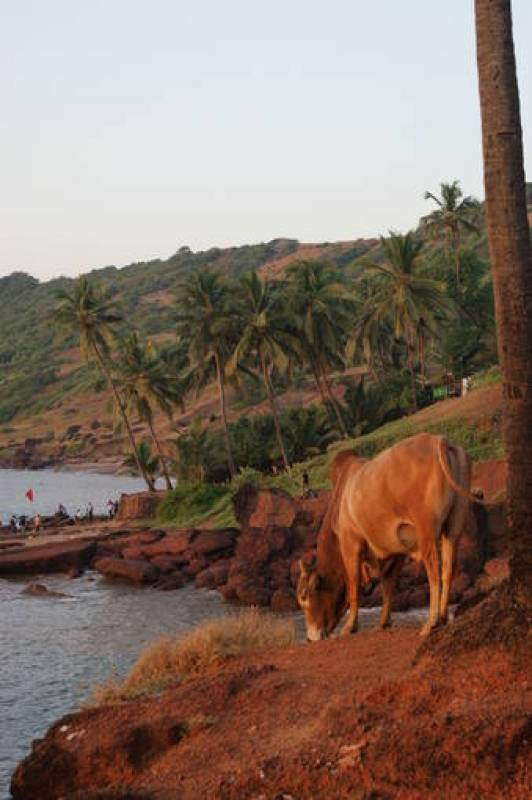 Playa de Anjuna, en Goa.