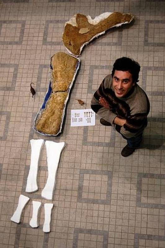 Octavio Mateus posa junto a los fósiles del saurópodo, que pudo medir 13 metros de longitud