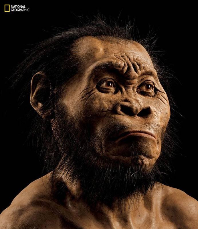 Reconstrucción de un Homo naledi