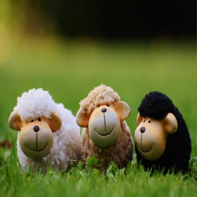 Una oveja, dos ovejas, tres ovejas