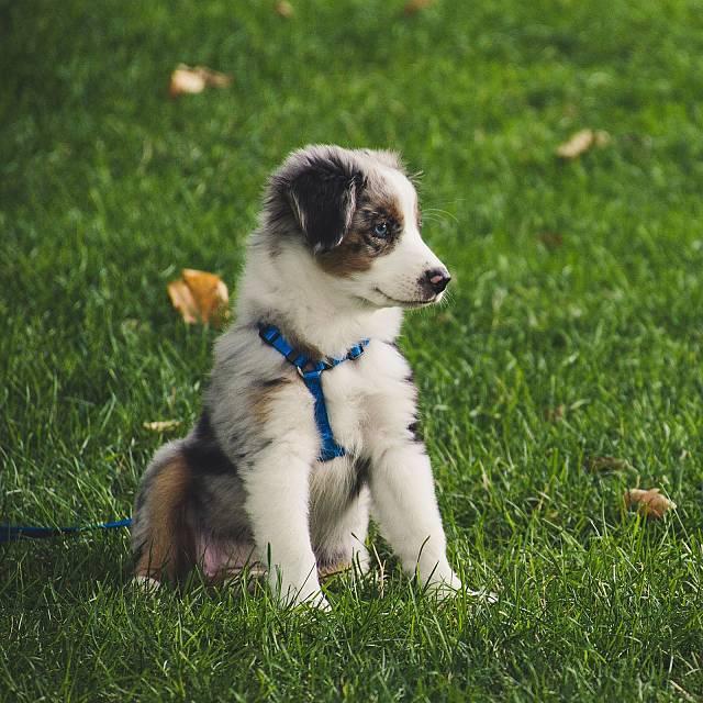 Reportaje: Ansiedad por separación en perros