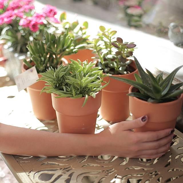 De buena planta: La luz que necesitan nuestras plantas