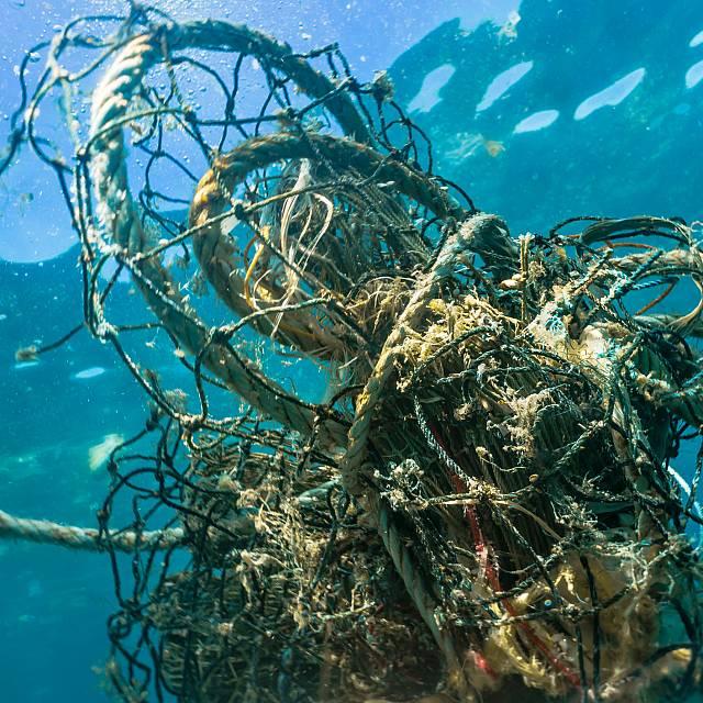El proyecto 'Ecofish +' de la UCA promueve la red Ecoazul