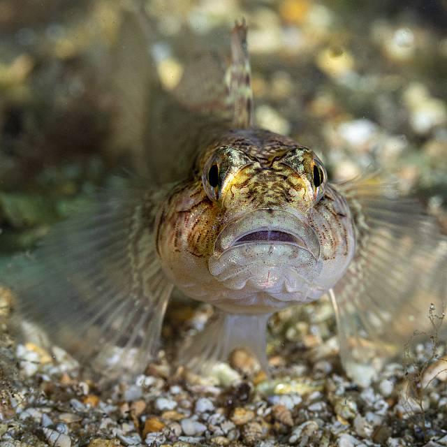 El futuro de las especies del Mar Menor