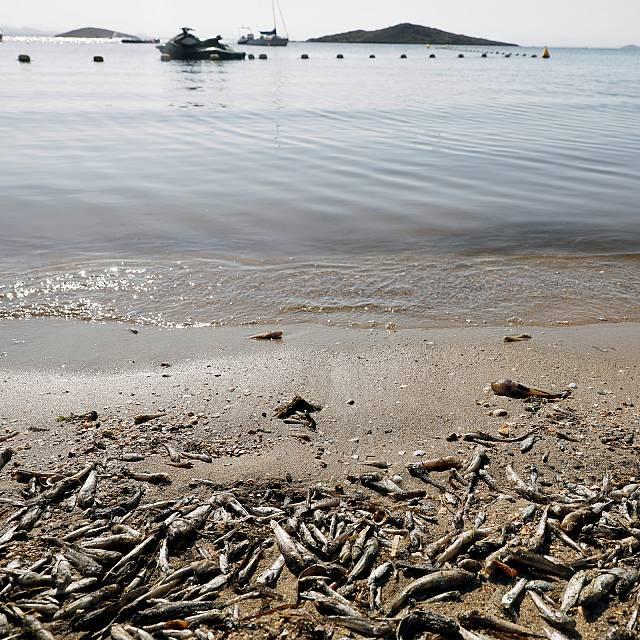 Ecologistas piden a la UE más implicación en el Mar Menor
