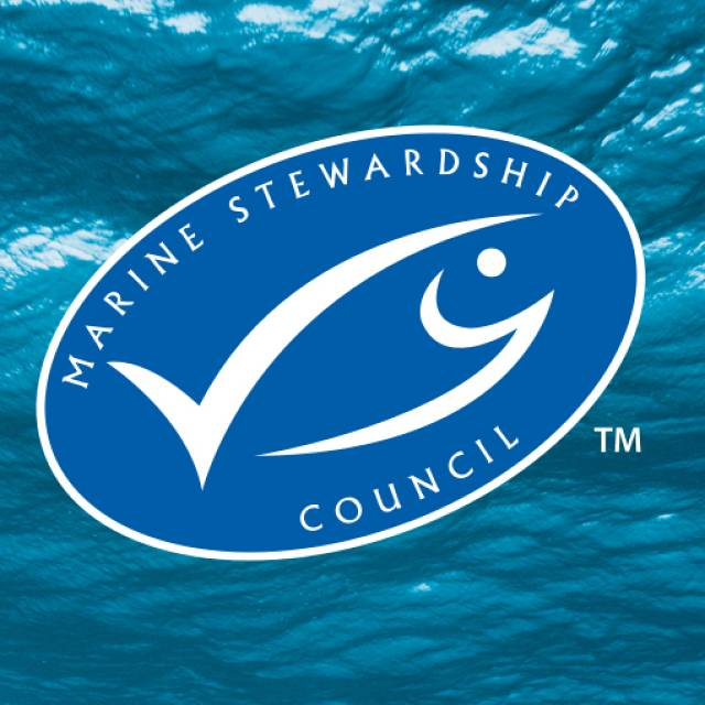 MSC en España: 10 años de viaje hacia una pesca sostenible