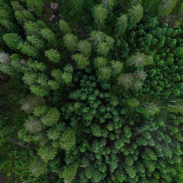 Nueva estrategia para conservar los bosques europeos