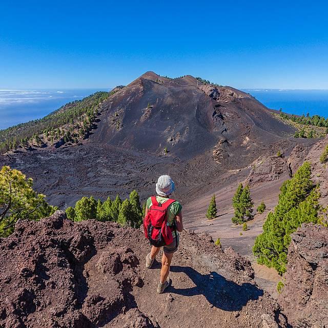 El impacto de la lava sobre la biodiversidad de La Palma
