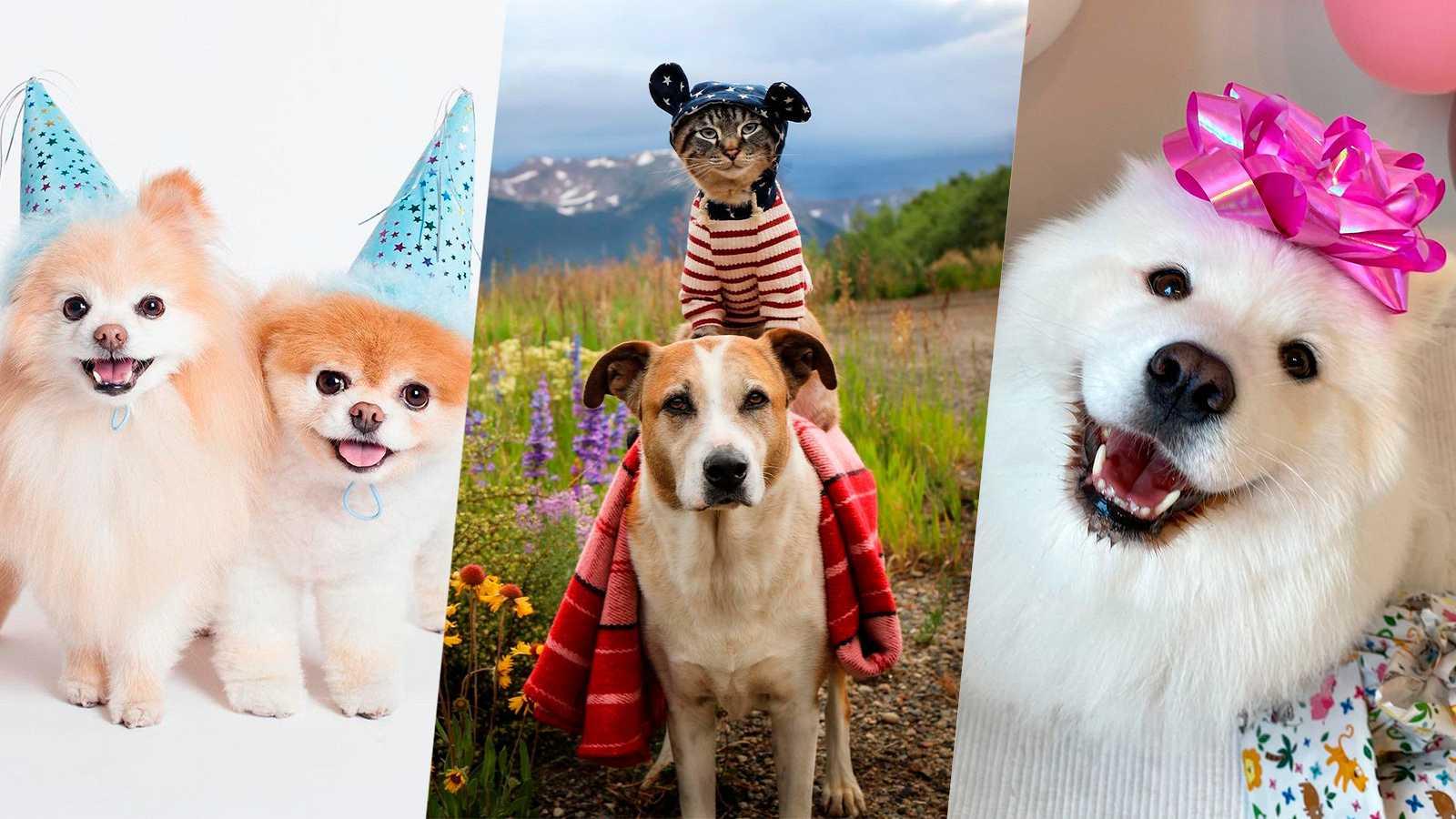 Los perritos más famosos de las redes sociales