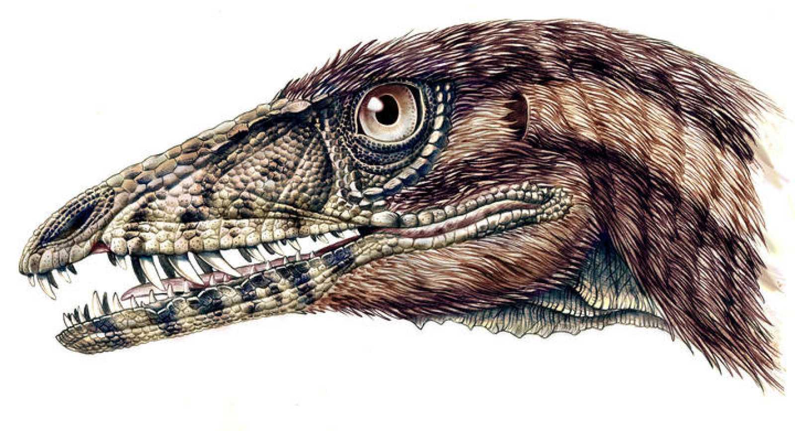 Un nuevo dinosaurio, perteneciente al linaje que dio origen al T-Rex y de unos 220 millones de años de antigüedad, apoya la teoría de que los dinosaurios surgieron en América del Sur