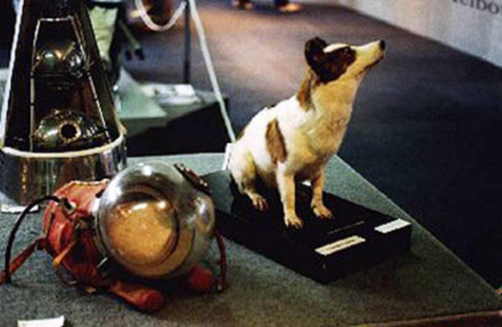 Strelka, una de las perras que participó en el viaje espacial, disecada y expuesta