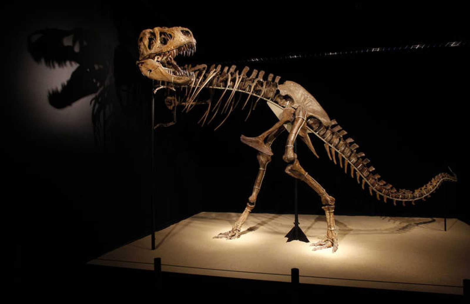 El esqueleto de un dinosaurio expuesto en una muestra