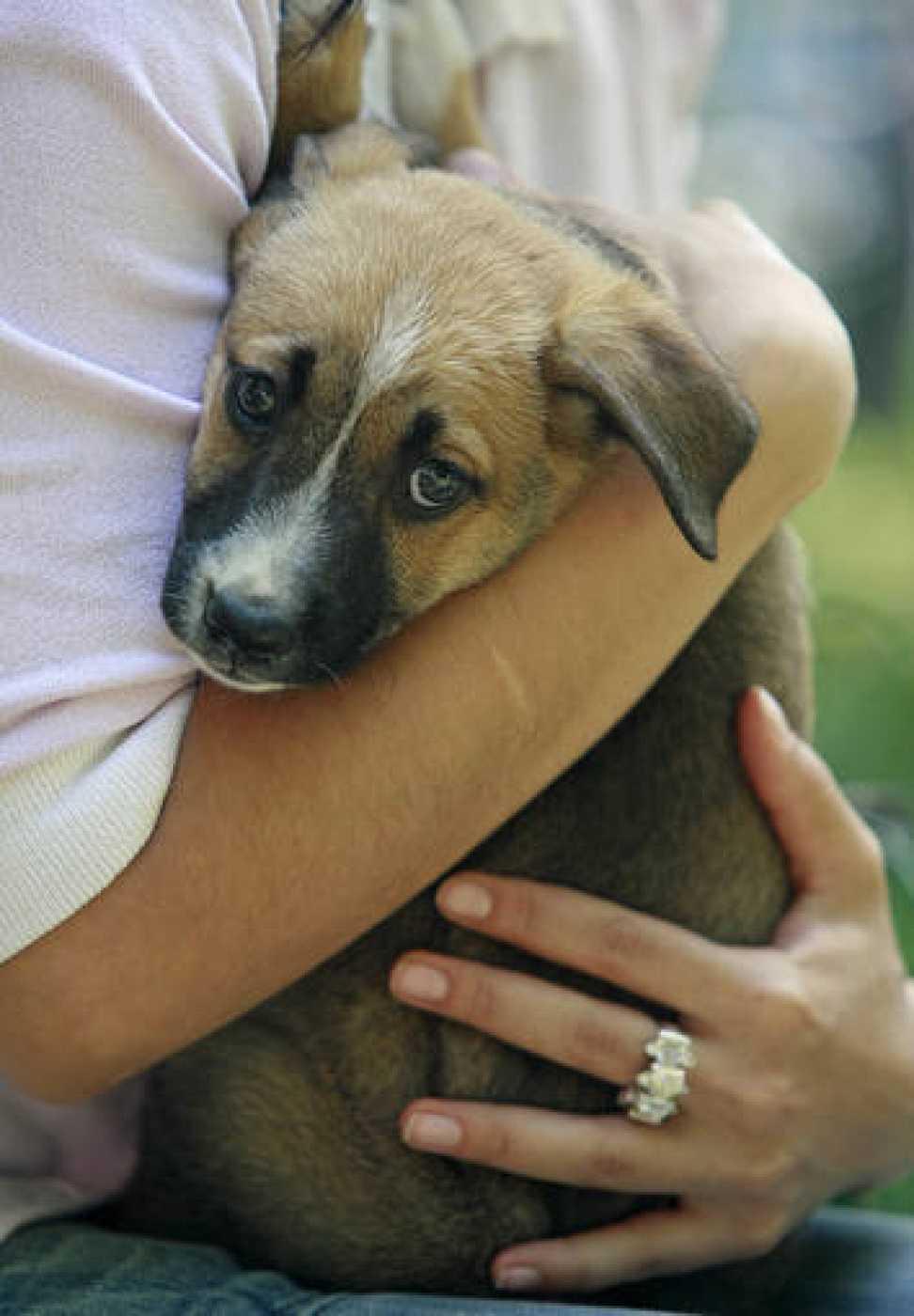 Un adolescente sujeta a un cachorro entre sus brazos