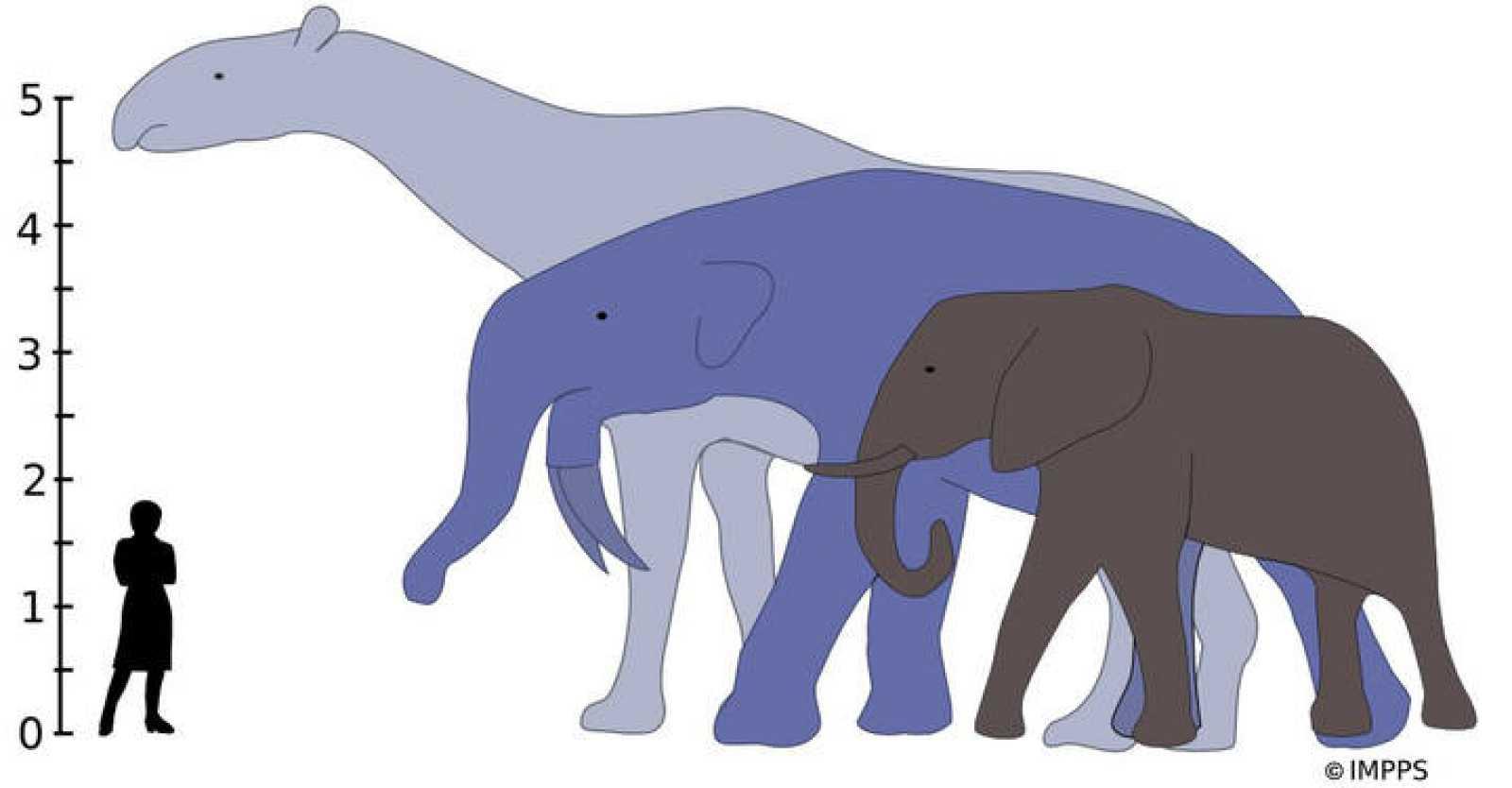 La 'explosión' de los mamíferos se debió a la extinción de los dinosaurios