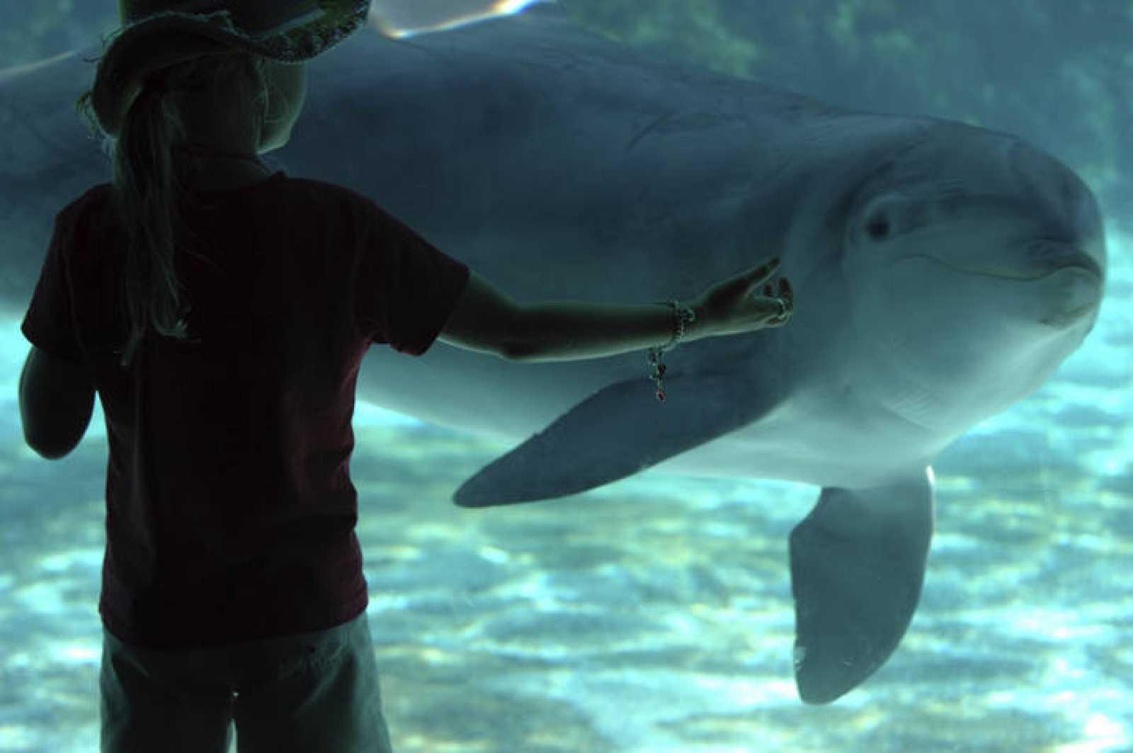 Los delfines tienen un amplio catálogo de silbidos y sonidos pulsados con los que se comunican entre ellos.