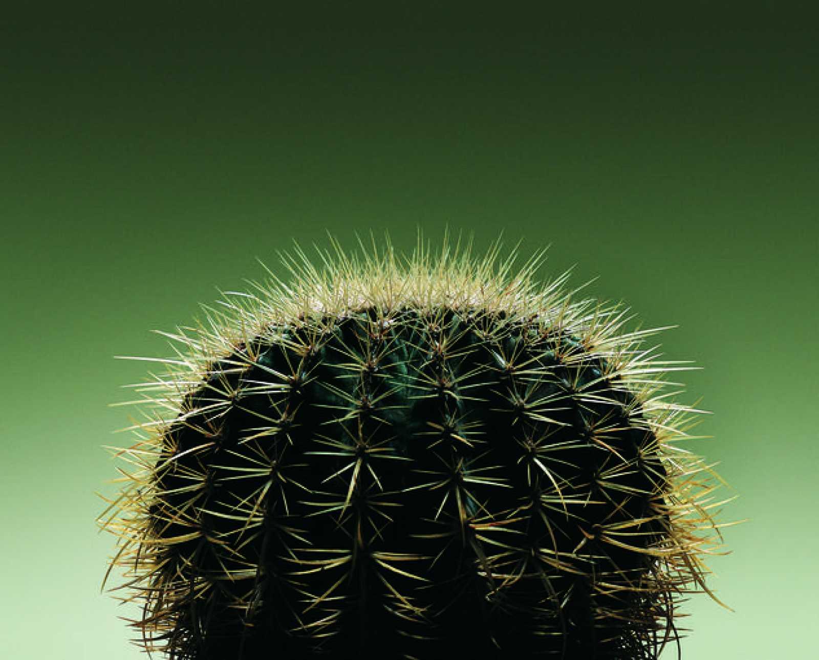 En algunas tiendas, normalmente situados al lado de la caja, hay pequeños cactus que se venden como `Cactus de ordenador¿