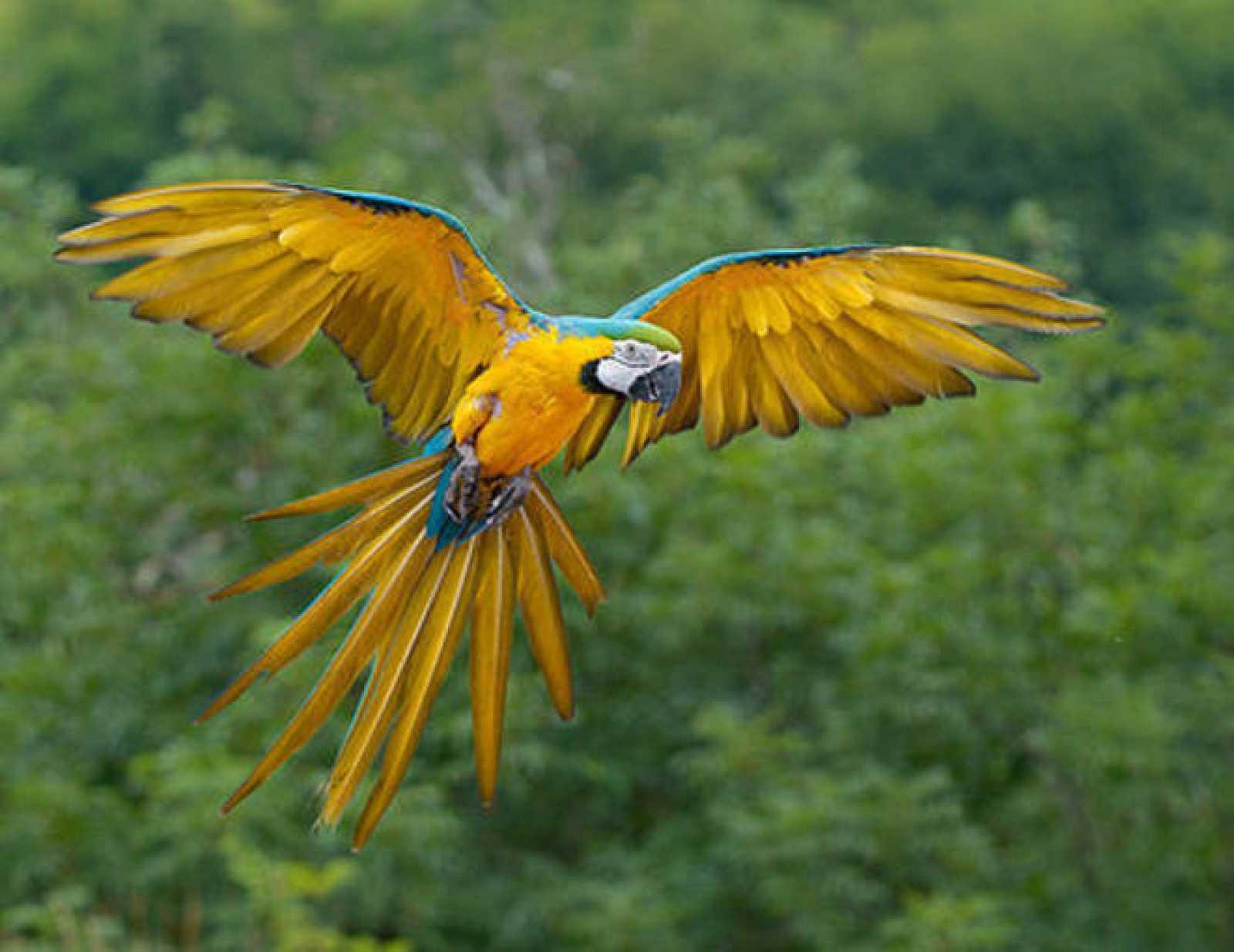 La nueva edición de la Enciclopedia de la Vida recoge tercio de las especies conocidas