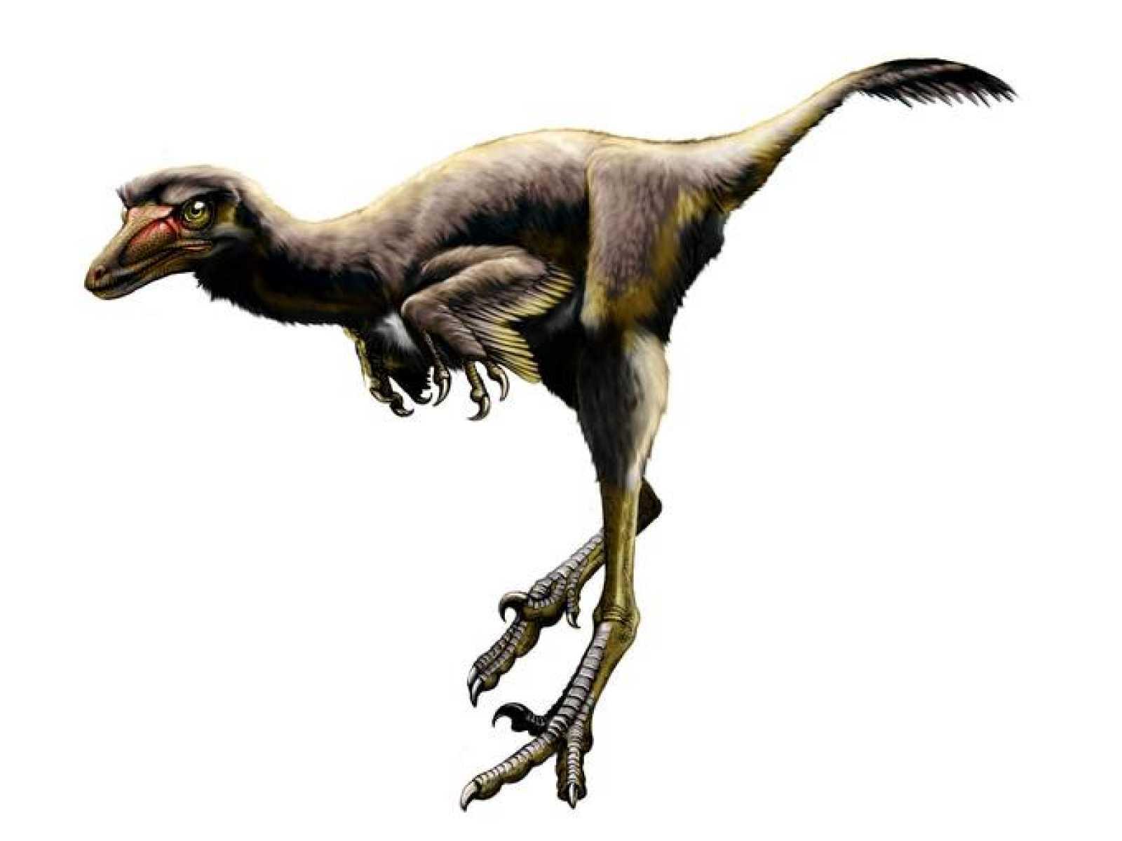 Descubren Un Nuevo Dinosaurio Raptor En Estados Unidos El Primero En 75 Anos Rtve Es Dinosaurios by raptor la serpiente visionaria, released 26 march 2019 1. descubren un nuevo dinosaurio raptor