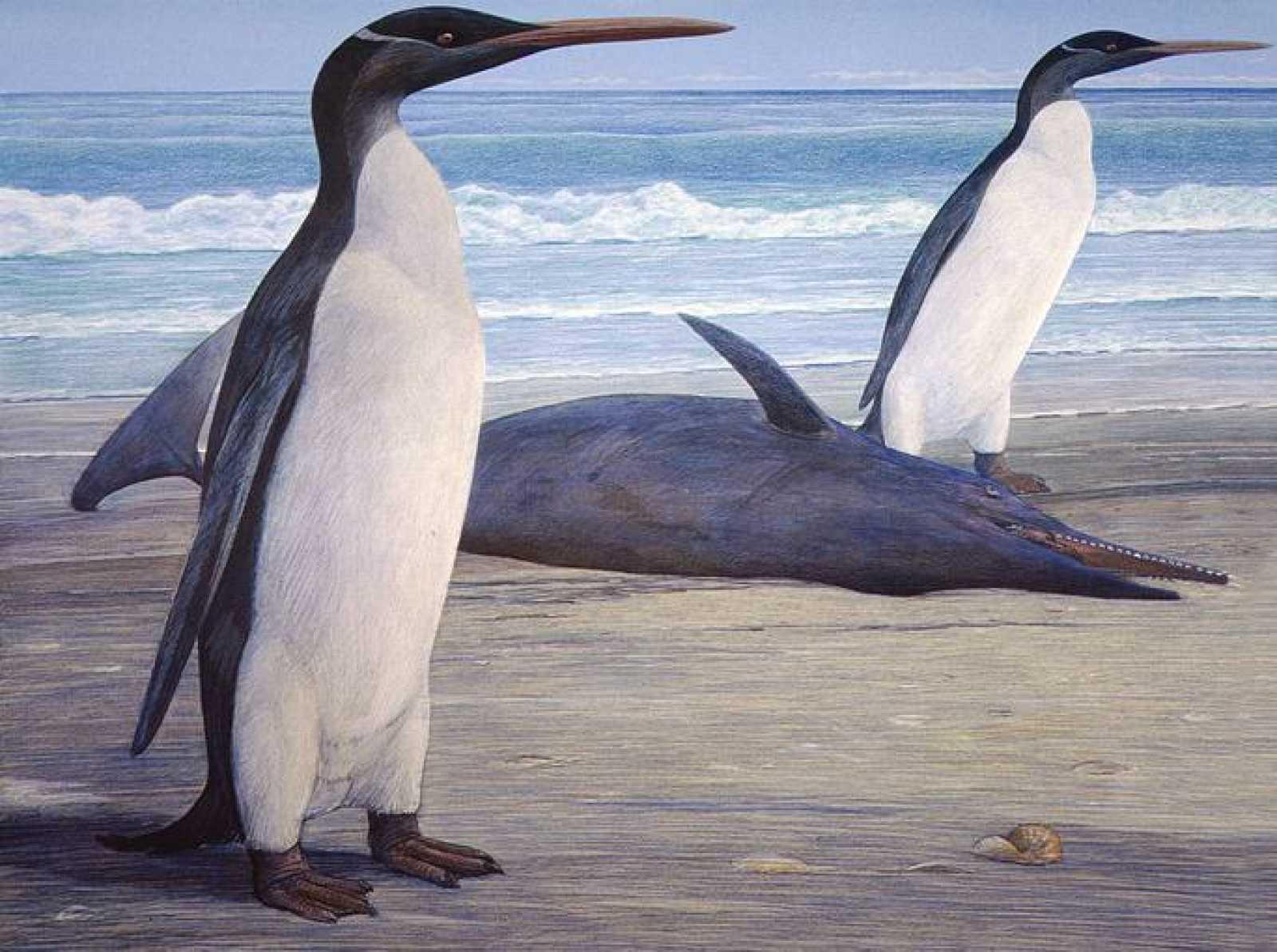 Recreación artística de cómo sería el pingüino gigante Kairuku