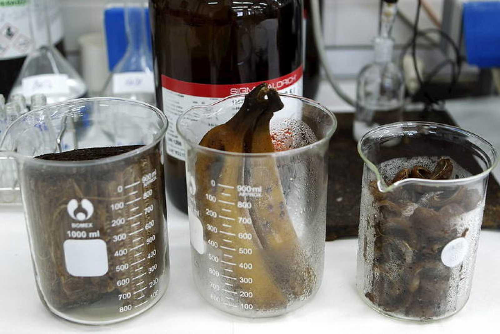 Plátanos de Canarias en la investigación para producir biocombustible.
