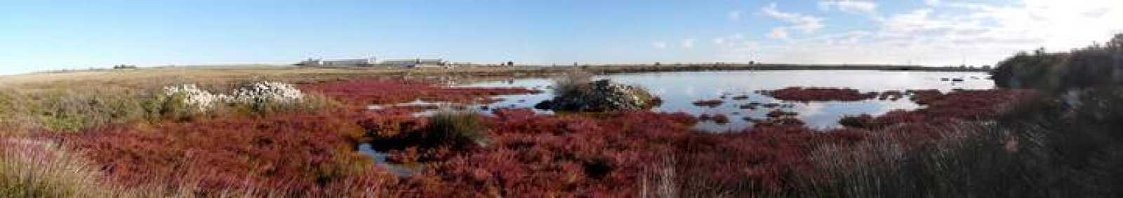 La Laguna Salobral con vegetación halófila circundante.