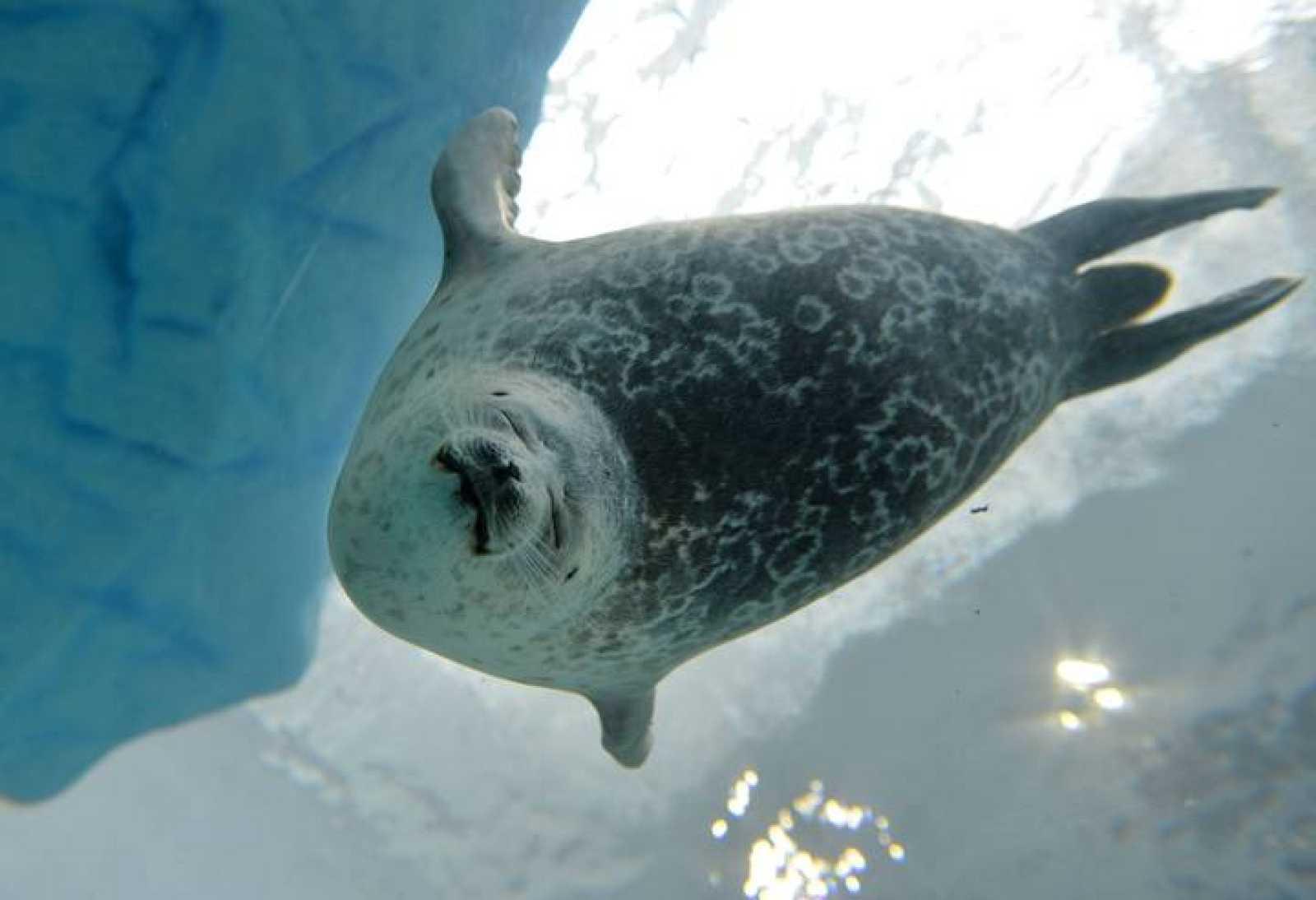 Las temperaturas de la superficie y de las profundidades de los océanos también aumentaron en 2012, según el informe de la Administración de Océanos y Atmósfera de Estados Unidos (NOAA).