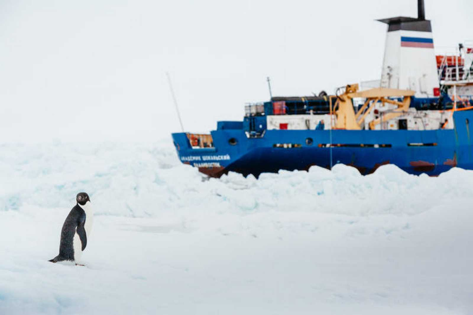 Un pingüino junto al 'Akademik Shokalskiy'