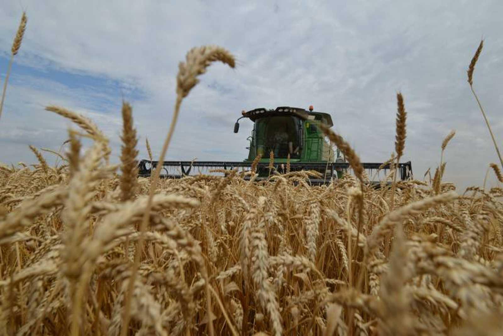 El trigo constituye la base de la alimentación del 30% de la población mundial
