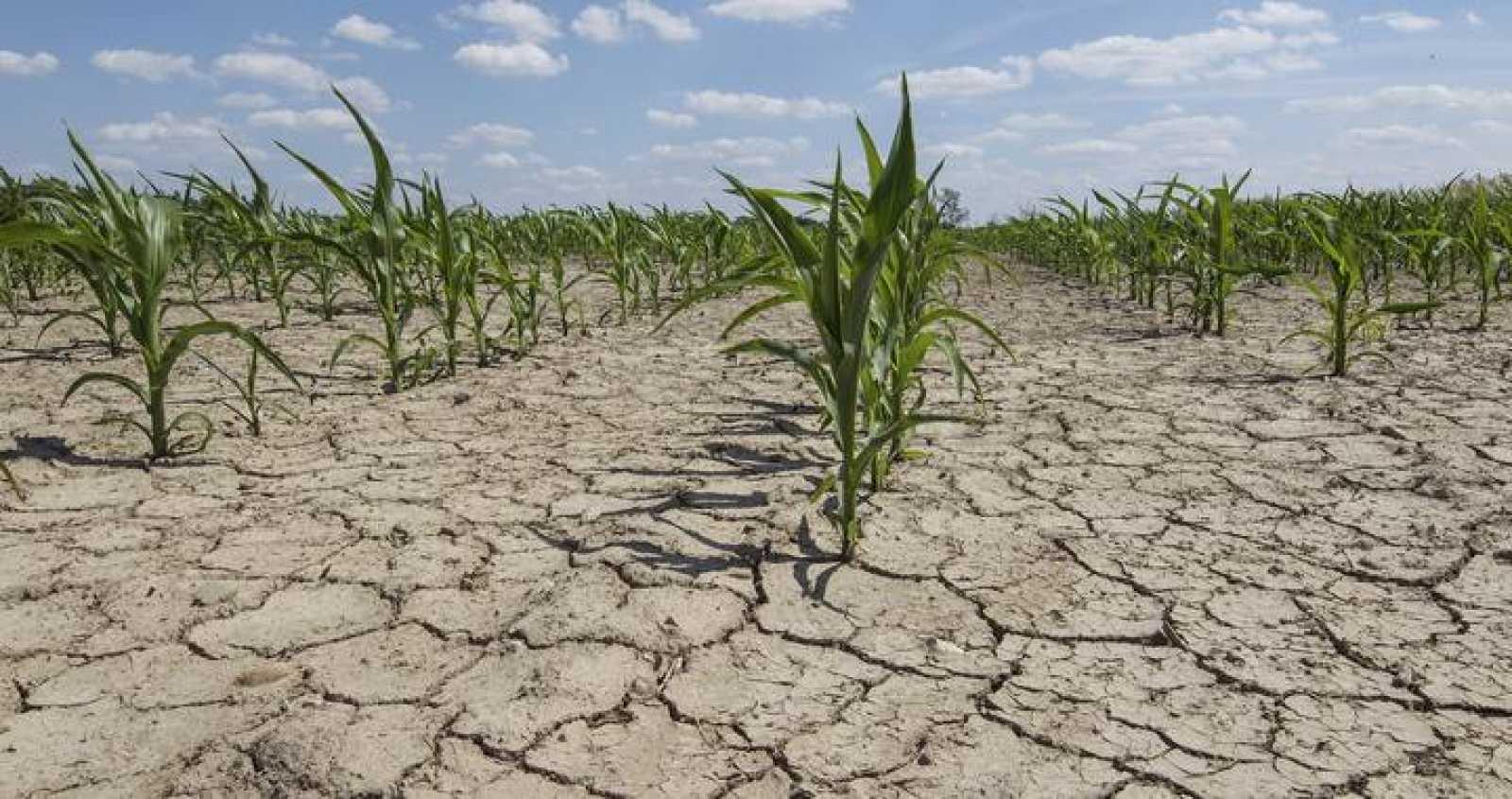 Imagen de archivo de una sequía extrema