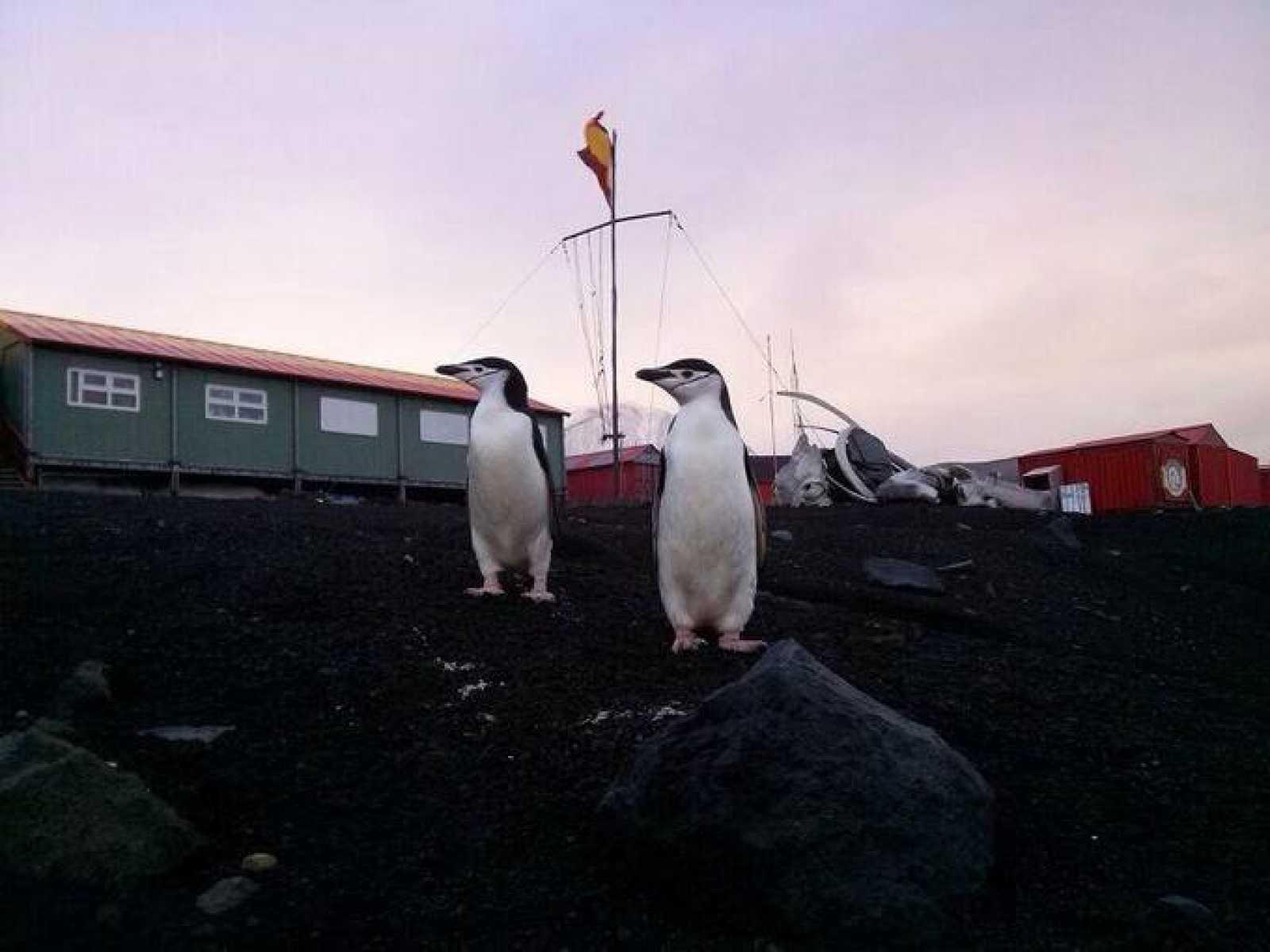 Los pingüinos son unos vecinos más en la base española del Ejército en la Isla Decepción