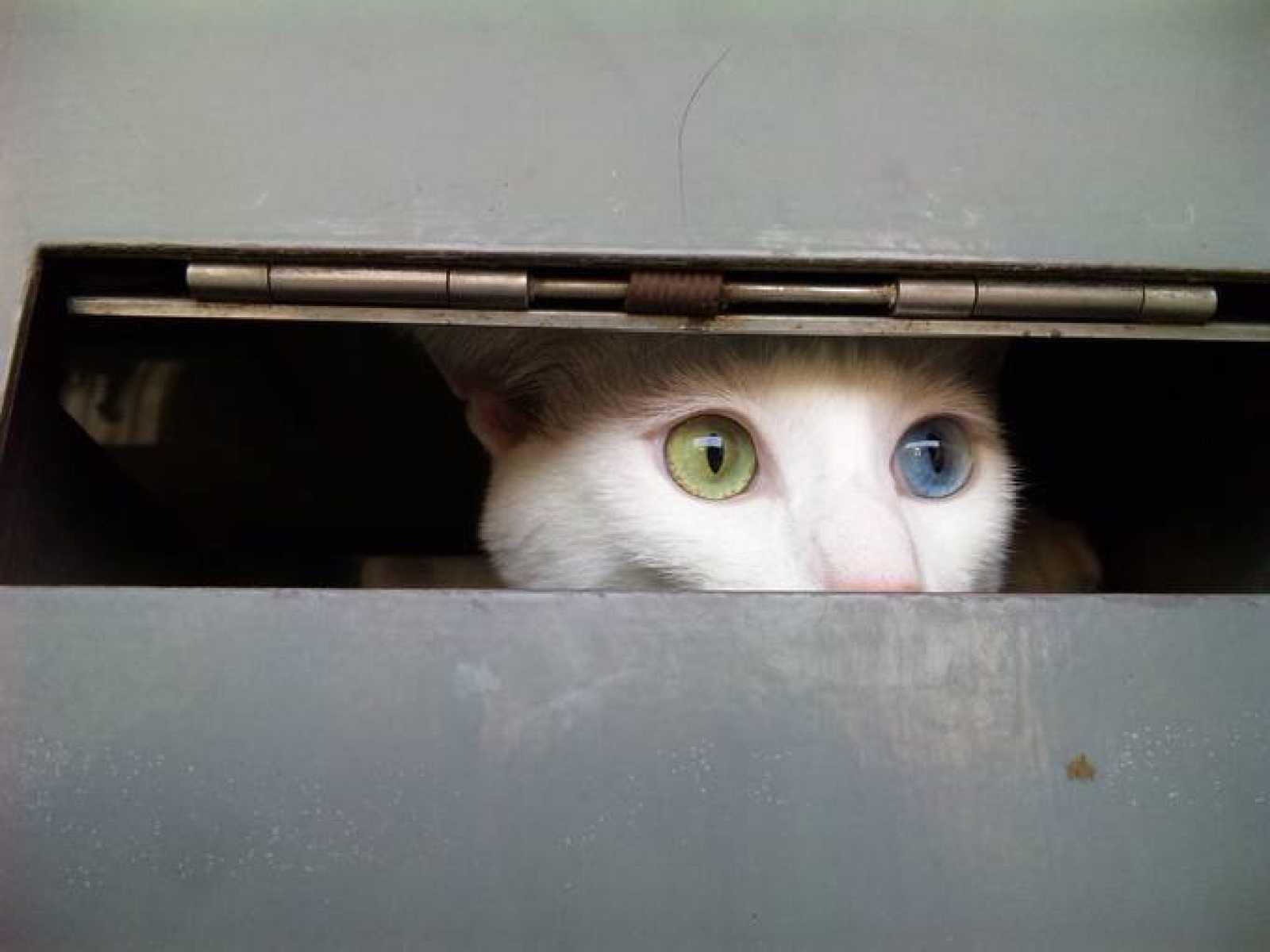 La mirada del gato cuántico de Schrödinger está dirigida por la curiosidad