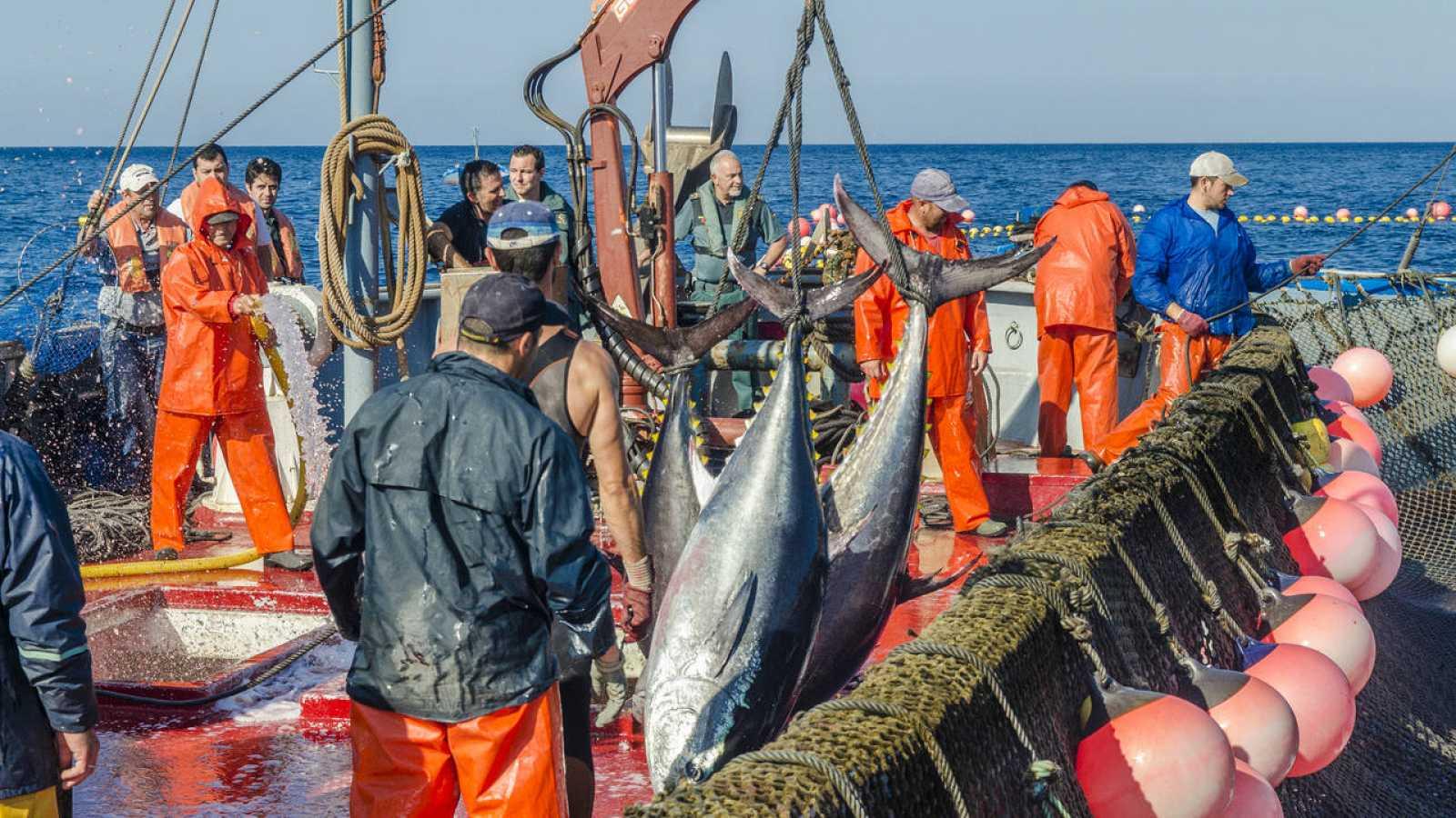 Pesca del atún de almadraba