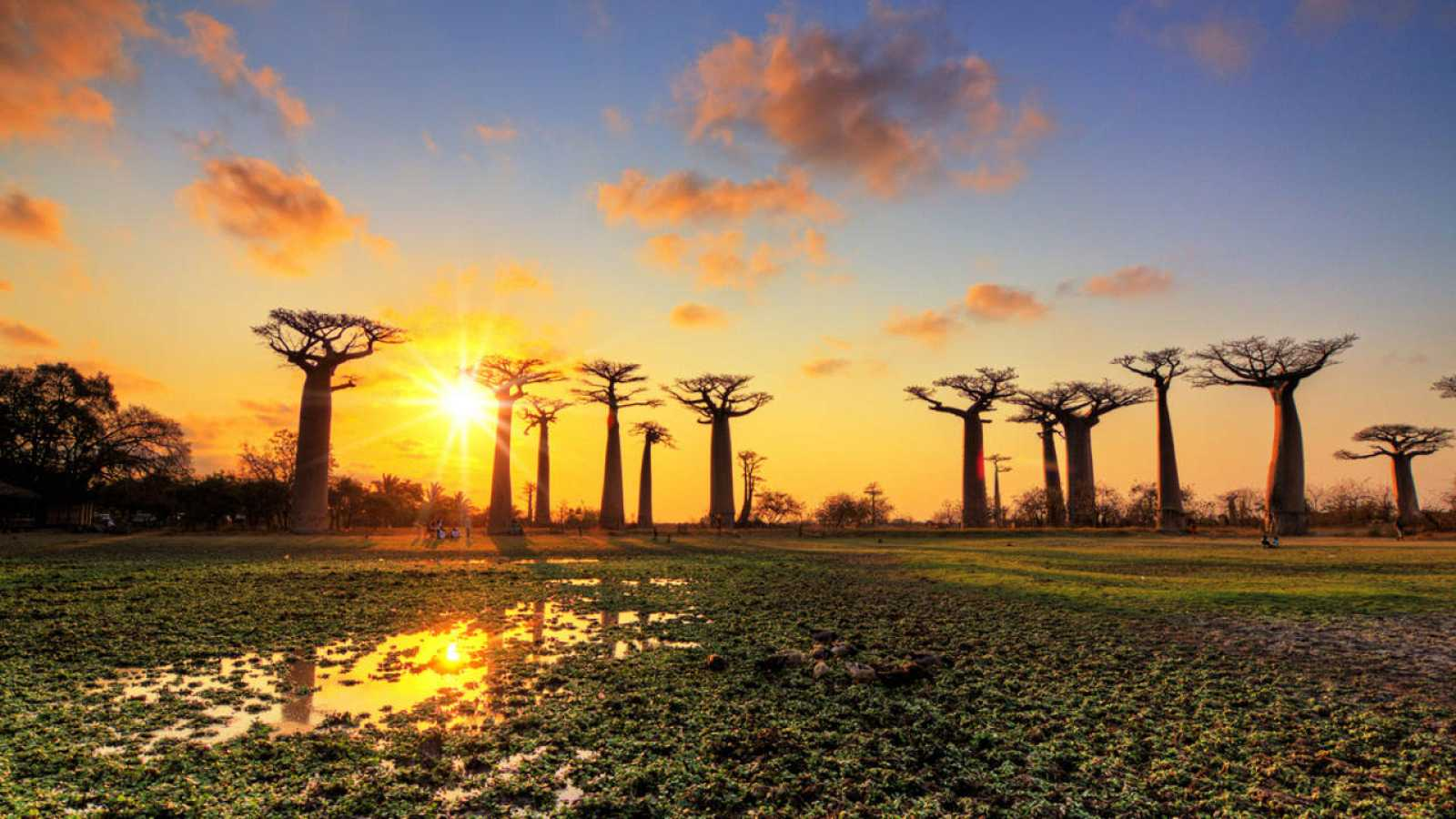 Amanecer en la isla de Madagascar sobre un grupo de baobabs