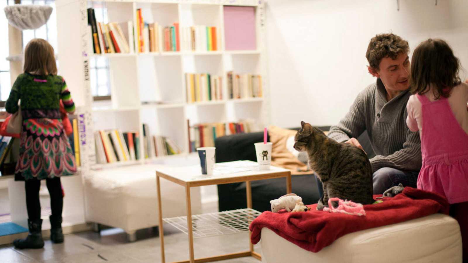 """La Gatoteca se inspira en los """"cafés de gatos"""" que nacieron en Asia."""