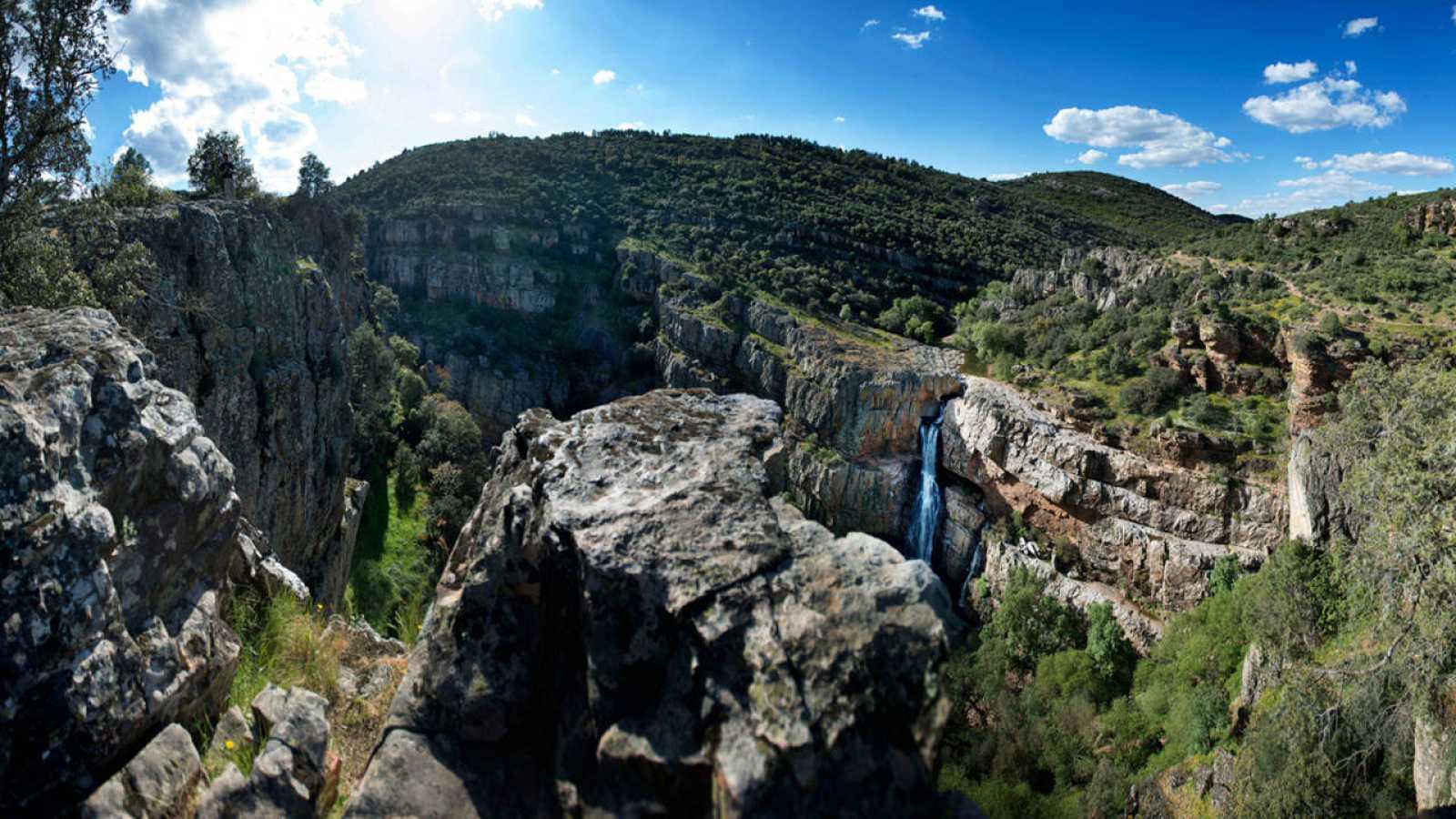 El 36,7% de la superficie total de España está ocupado por bosques.