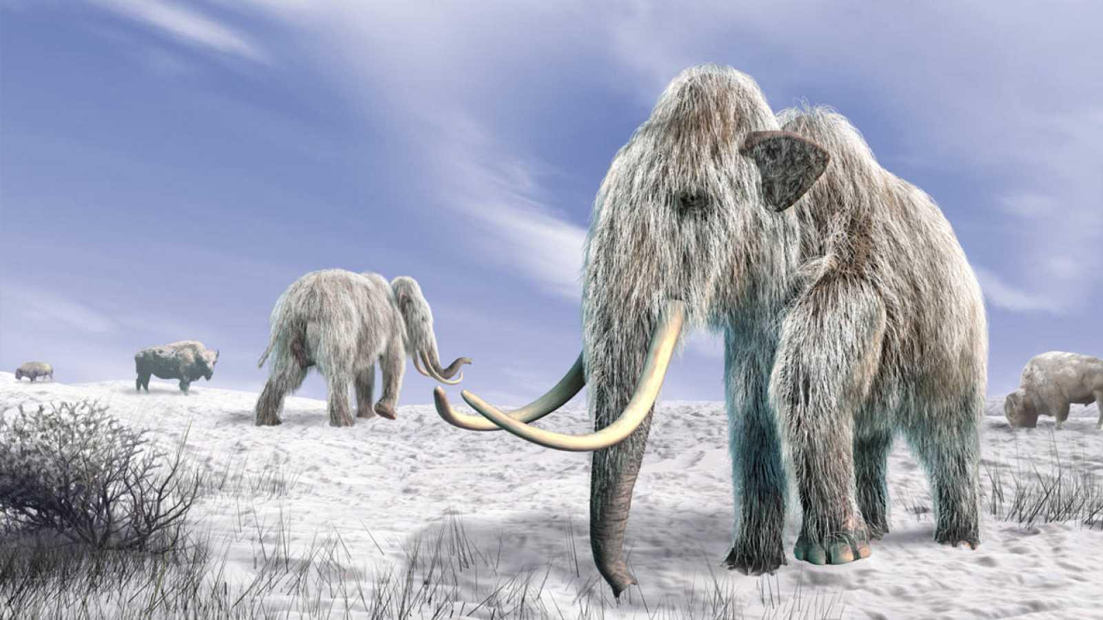 La población de mamuts de la isla de Sant Paul vivió hasta hace aproximadamente 5.600 años.