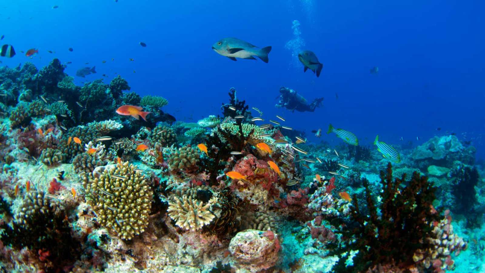 En algunos lugares específicos de los arrecifes de Maldivas, el blanqueo de corales afecta al 90%.