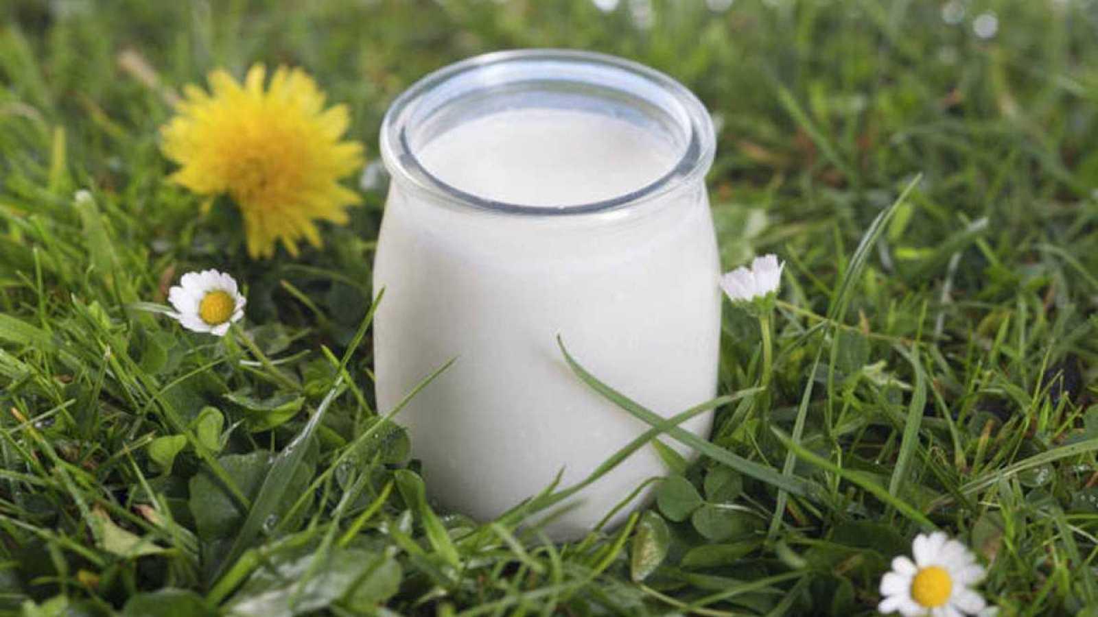 Los alimentos como el yogur contienen bacterias vivas.