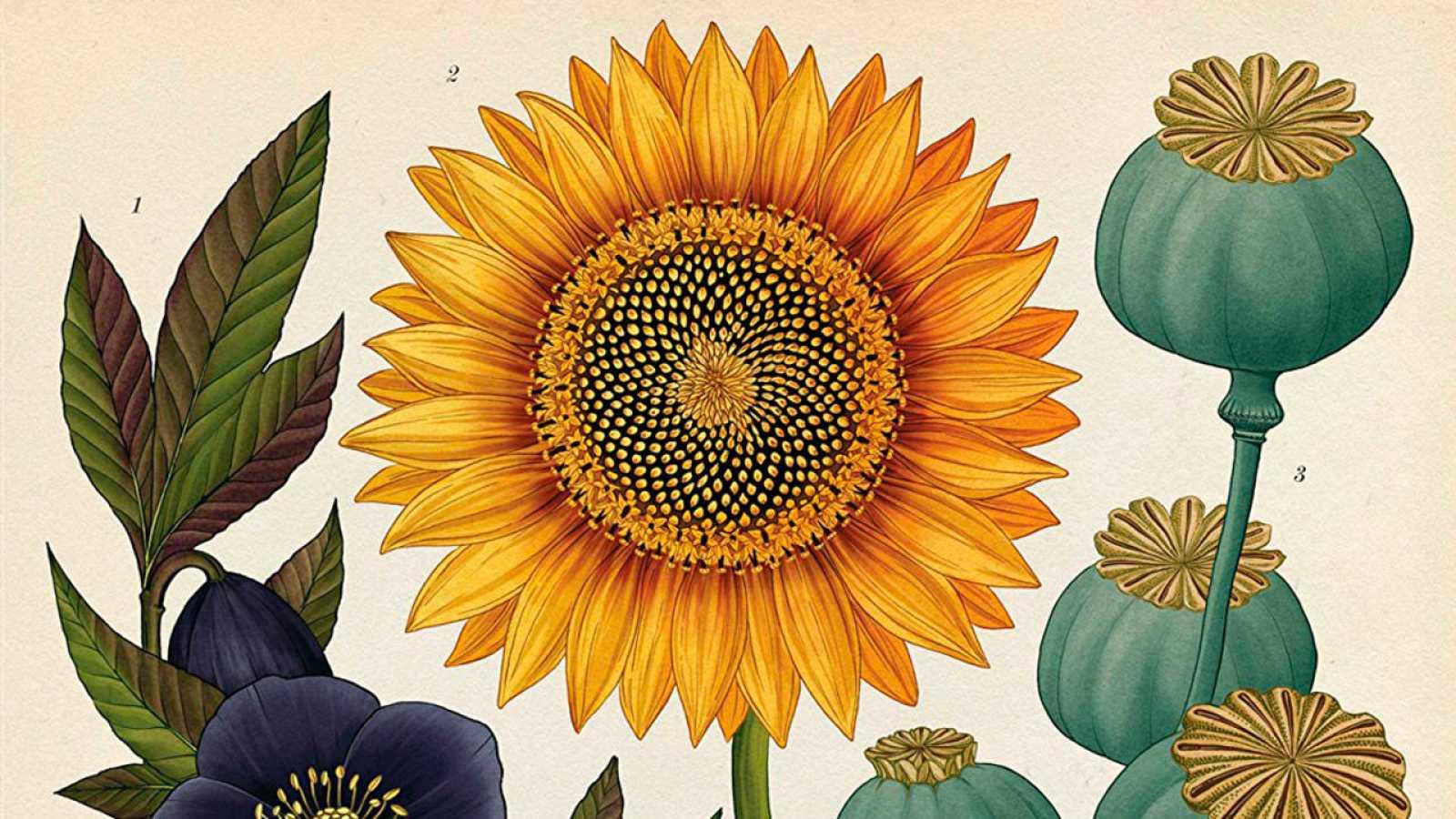 Fragmento de una ilustración de 'Botanicum'