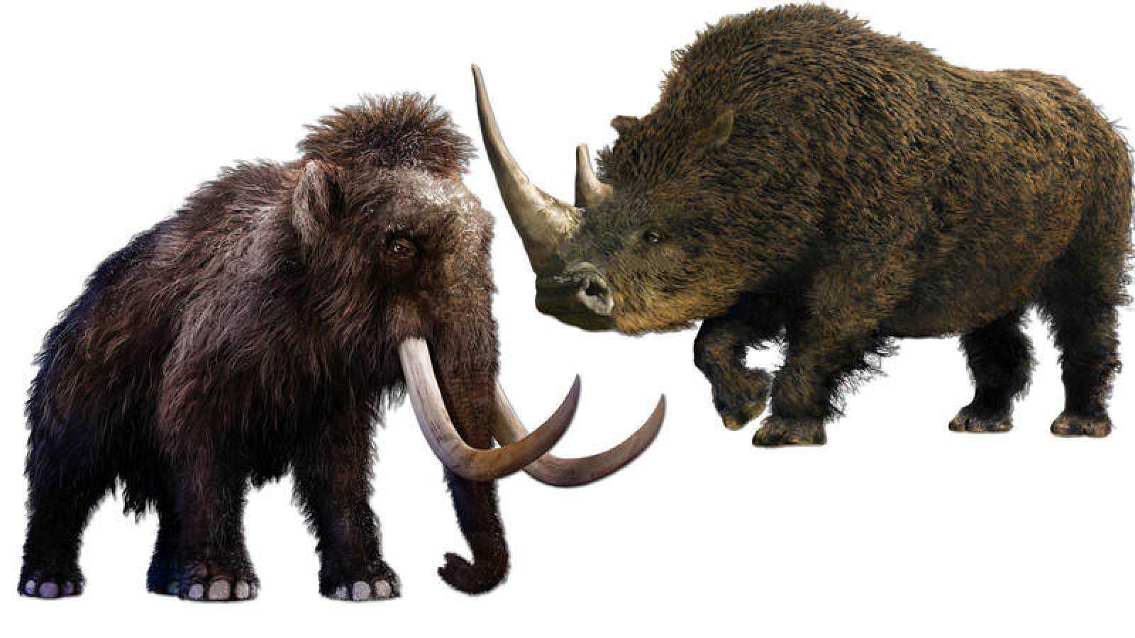 Woolly Rhinoceros