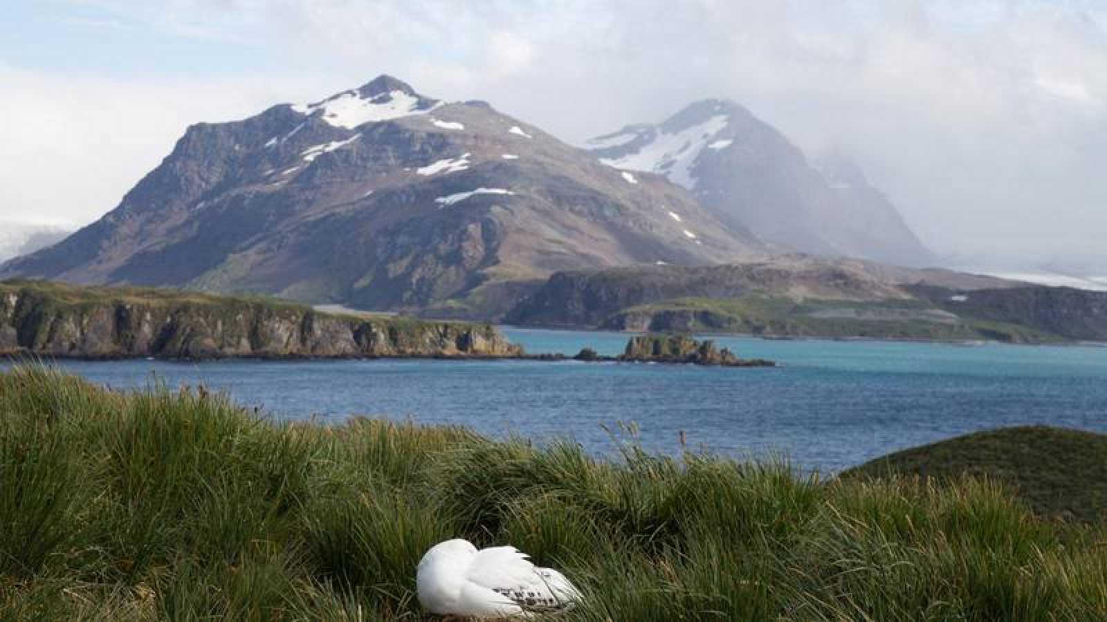 Imagen de Isla San Pedro o Georgia del Sur, la principal del archipiélago de las Islas Georgias del Sur.