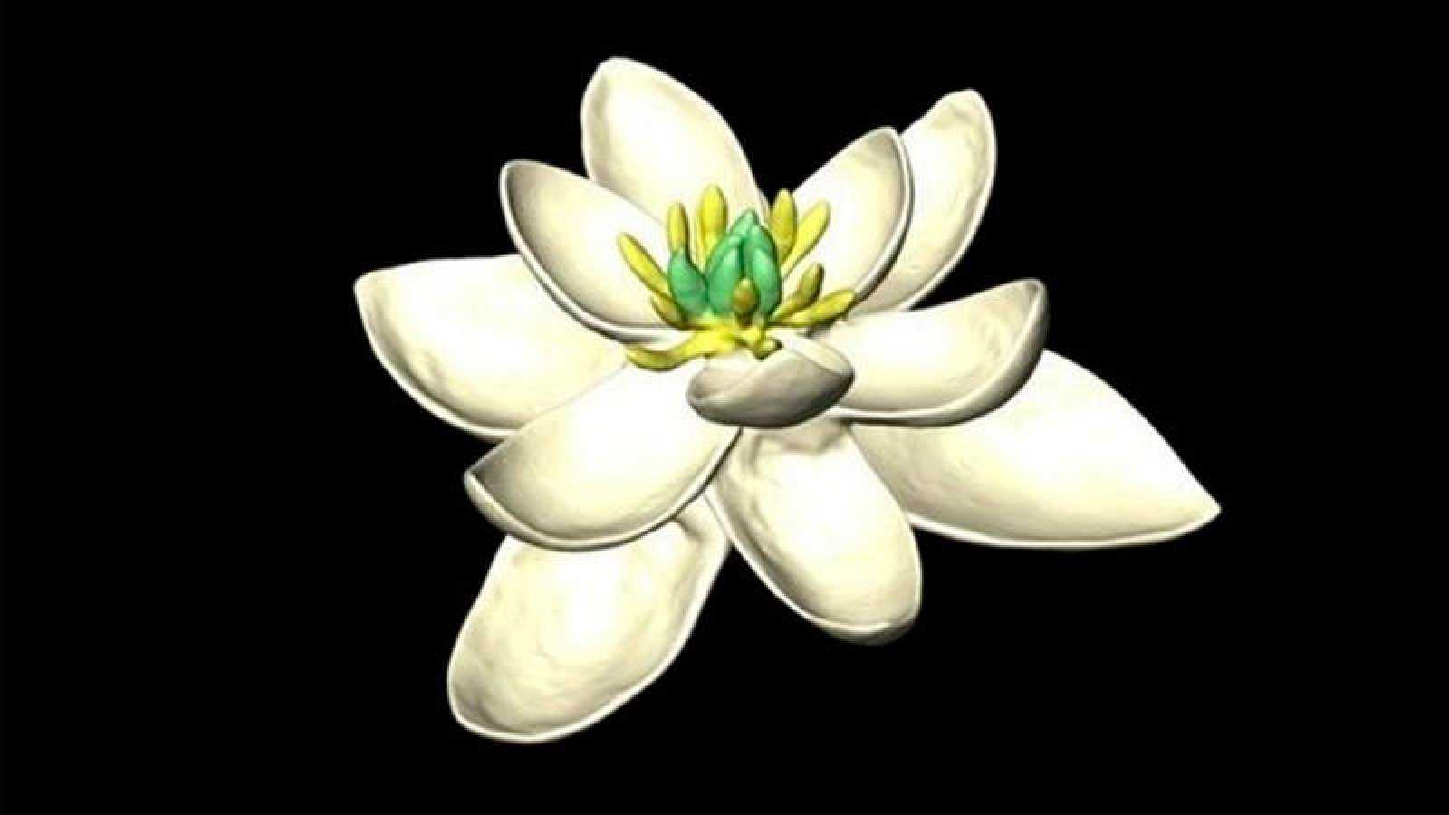 Así pudo ser el ancestro común de todas las flores
