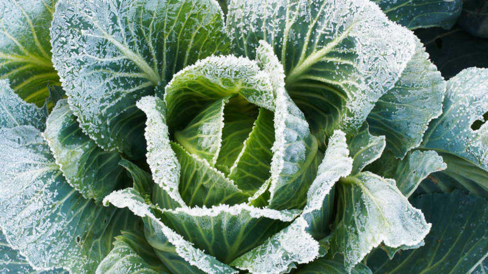 Cuidados para los cultivos de hoja en otoño