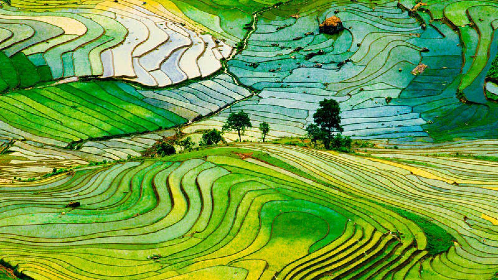 Cultivo terraplenado de arroz en Vietnam